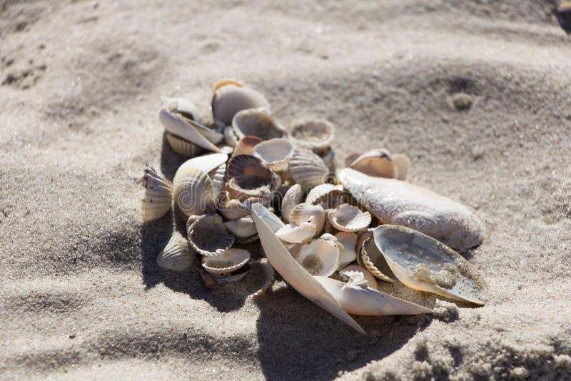 Conchiglie di vari tipi e dimensione sulla sabbia pulita immagini stock