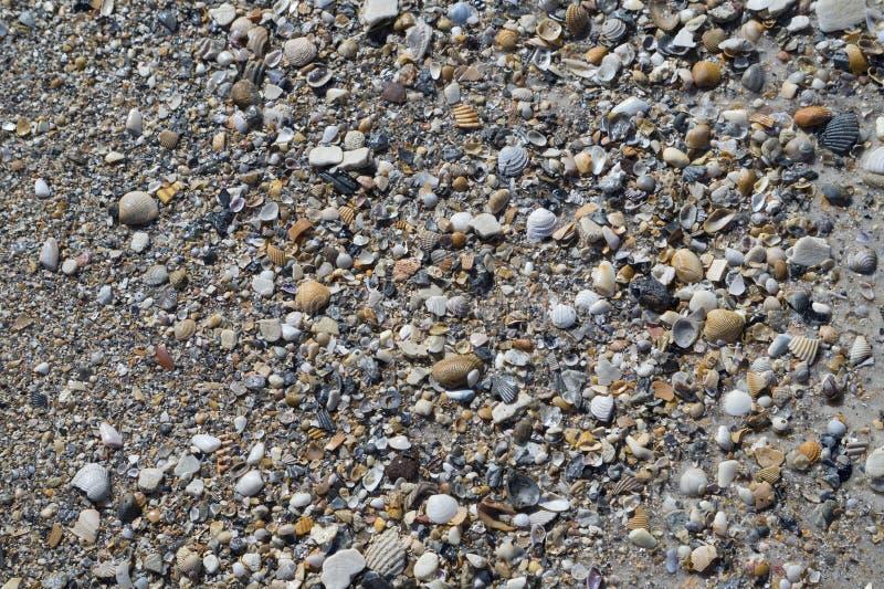 Conchiglie e ciottoli sulla spiaggia immagini stock