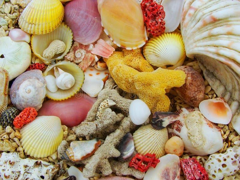 Conchiglie e corallo duro morto su una spiaggia immagine stock