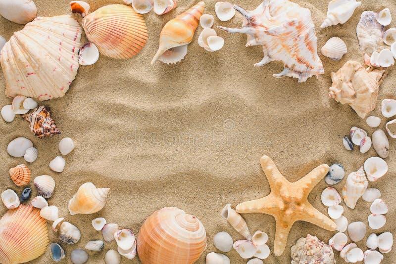 Conchiglie e fondo dei ciottoli, pietre naturali della spiaggia fotografia stock