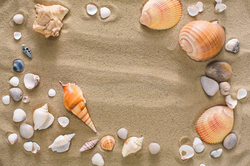 Conchiglie e fondo dei ciottoli, pietre naturali della spiaggia fotografia stock libera da diritti