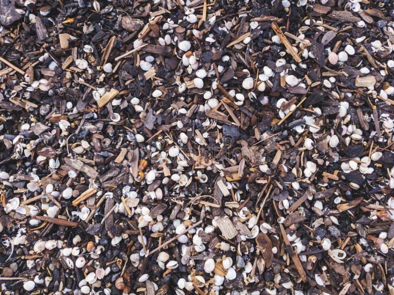 Conchiglie e piccoli pezzi di legno scoloriti sulla spiaggia immagine stock libera da diritti