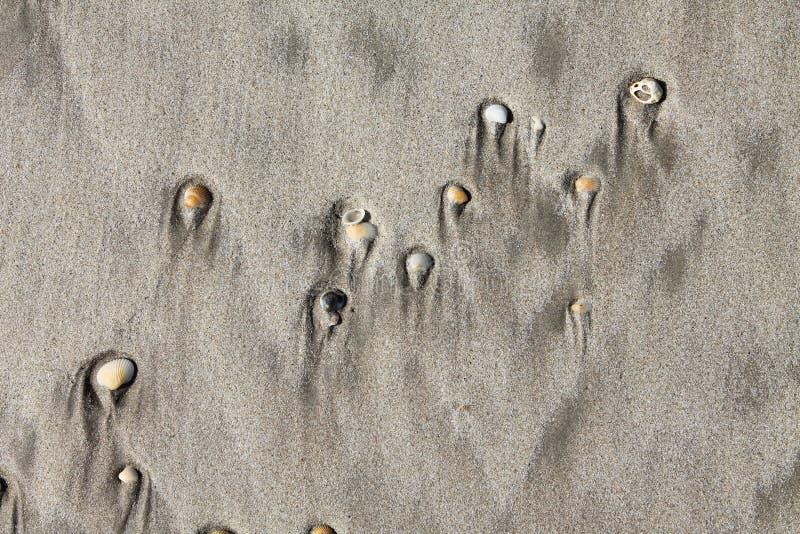 Conchiglie e sabbia immagine stock
