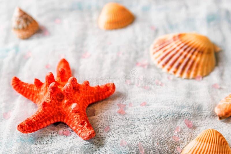 Conchiglie e stelle marine sul fondo bianco del panno immagine stock