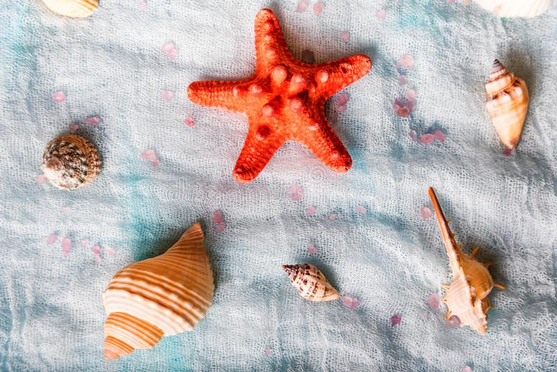 Conchiglie e stelle marine sul fondo bianco del panno fotografia stock