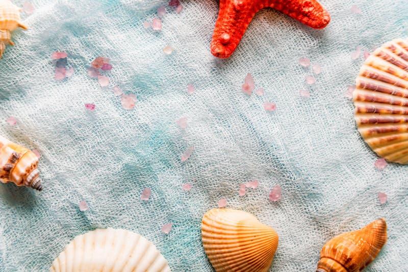 Conchiglie e stelle marine sul fondo bianco del panno immagini stock