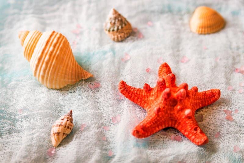 Conchiglie e stelle marine sul fondo bianco del panno immagine stock libera da diritti