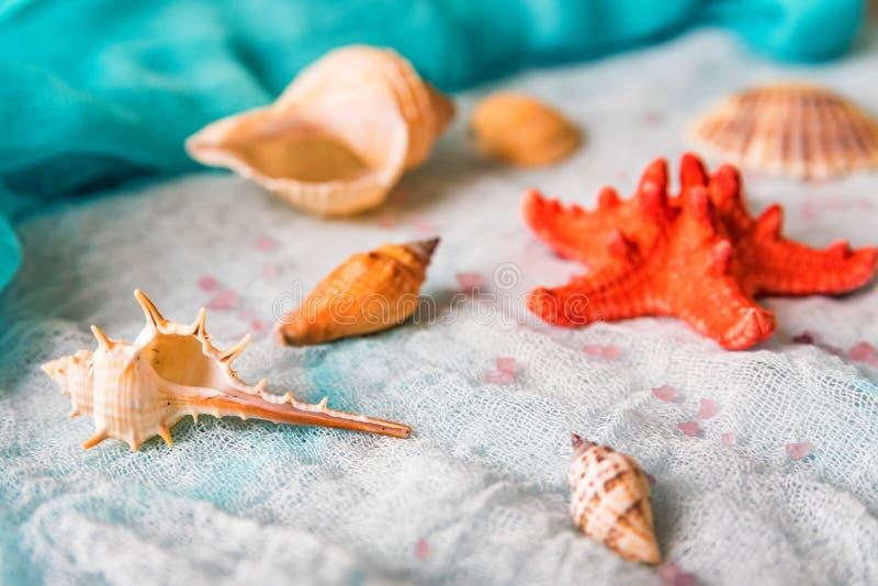 Conchiglie e stelle marine sul fondo bianco del panno fotografie stock
