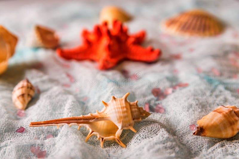 Conchiglie e stelle marine sul fondo bianco del panno fotografia stock libera da diritti