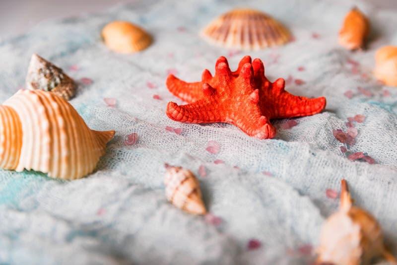 Conchiglie e stelle marine sul fondo bianco del panno immagini stock libere da diritti