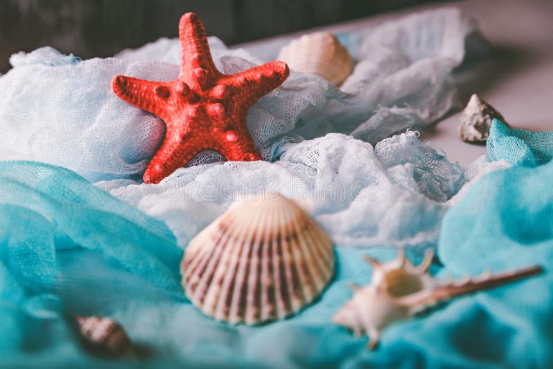 Conchiglie e stelle marine sul panno cian e bianco immagini stock