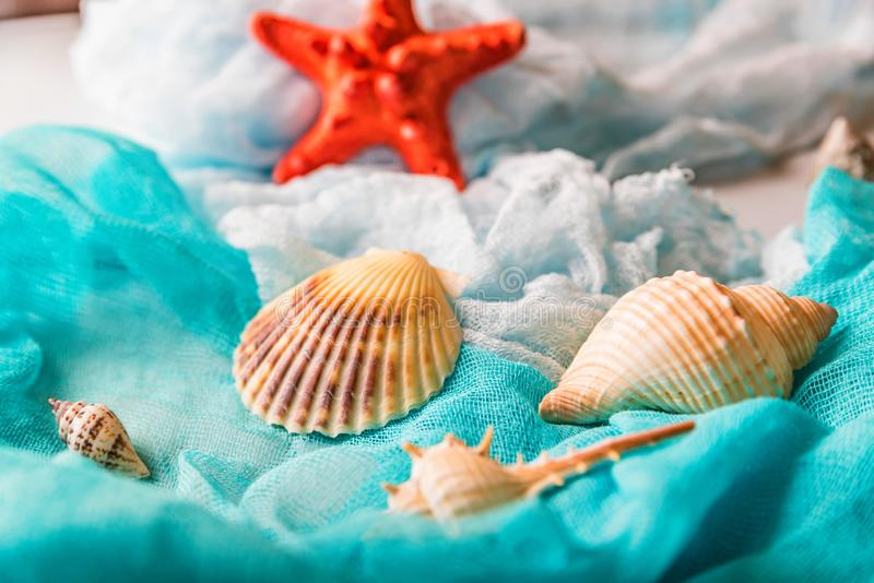 Conchiglie e stelle marine sul panno cian e bianco immagini stock libere da diritti