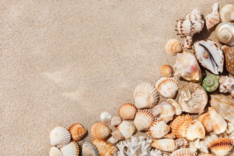 Conchiglie esotiche sulla sabbia Priorità bassa della spiaggia di estate Vista superiore, poliziotto fotografia stock libera da diritti