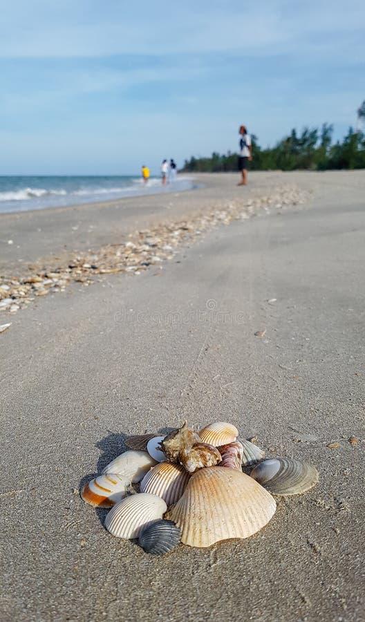 Conchiglie naturali sulla spiaggia di Pak Panang fotografie stock libere da diritti