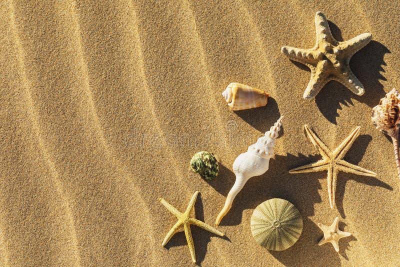Conchiglie nella sabbia con lo spazio della copia immagini stock libere da diritti