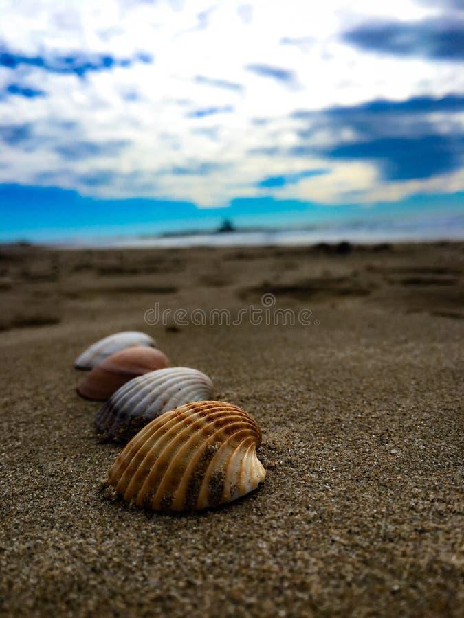 Conchiglie, Spagna, spiaggia, blu, sabbia, mare, cielo, estate, bagnata fotografie stock libere da diritti