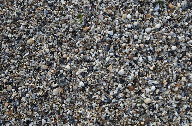 Conchiglie sulla baia di Swansea, Galles del sud, Regno Unito immagini stock