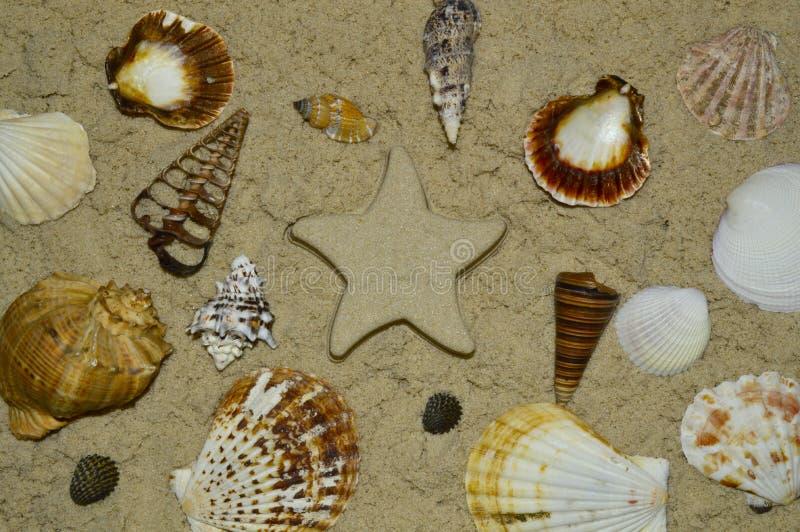 Conchiglie sulla sabbia e sulla stella fatte della sabbia fotografia stock