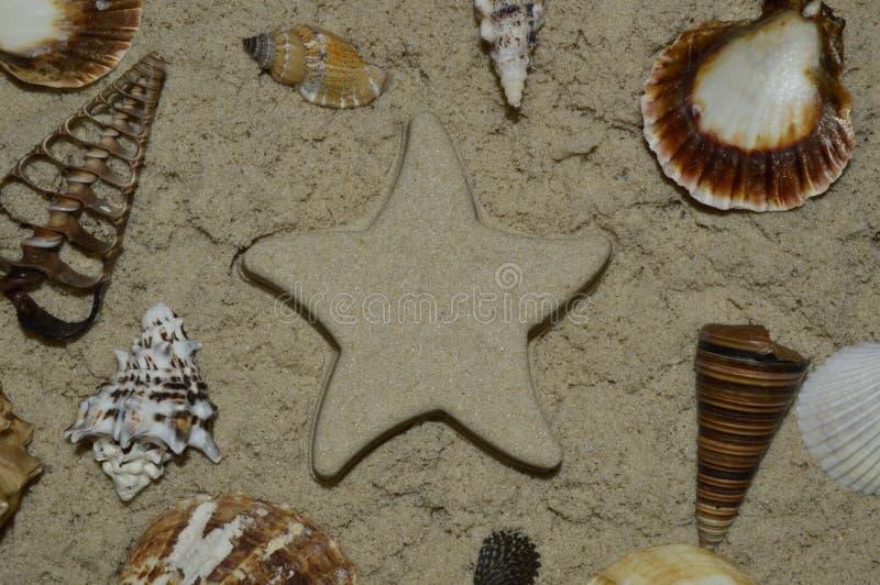 Conchiglie sulla sabbia e sulla stella fatte della sabbia fotografie stock libere da diritti