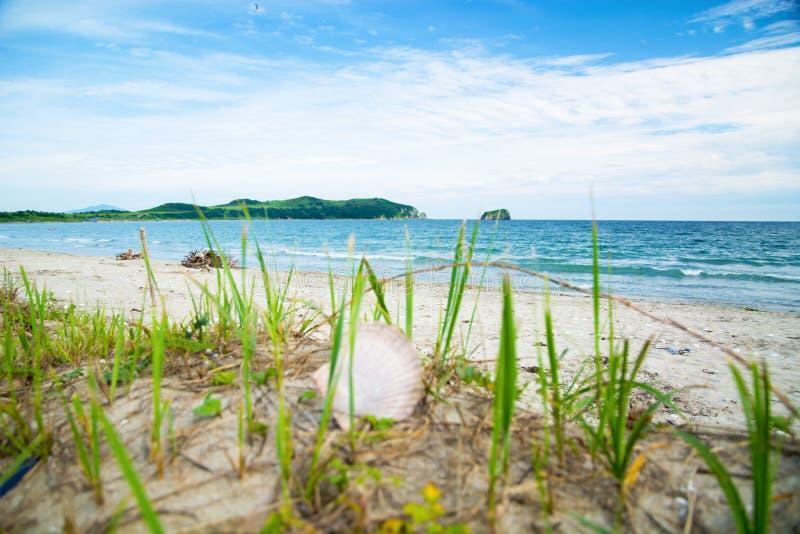 Conchiglie sulla spiaggia, accesa dal Sun Molte coperture sulla sabbia bianca fotografia stock libera da diritti