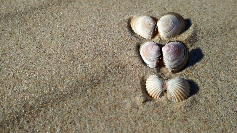 Conchiglie sulla spiaggia soleggiata fotografia stock libera da diritti