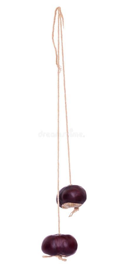 Conciles Graines de châtaignier du Cheval, Aesculus hippocastanum, sur cordes pour le gibier traditionnel Isolé sur blanc photo stock