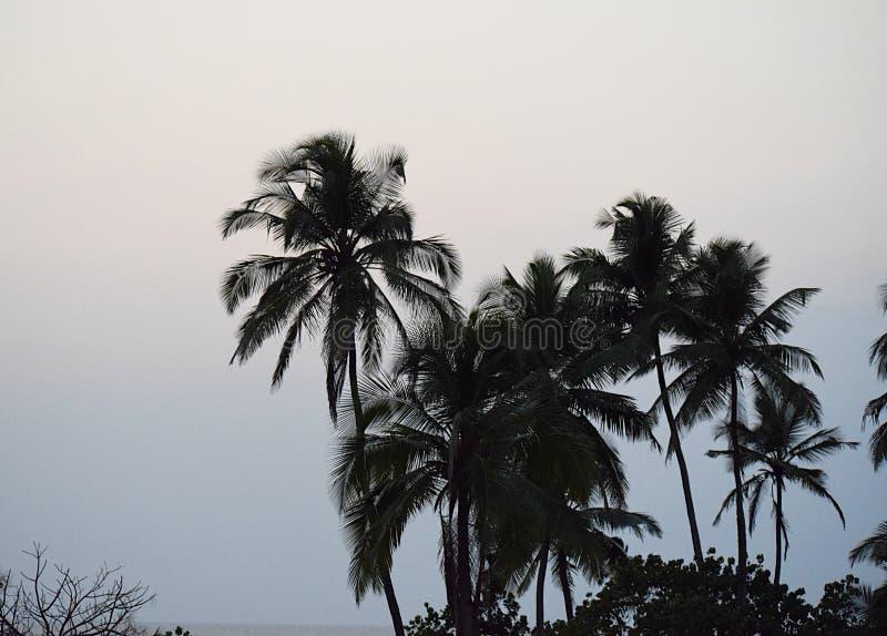 Conclusione del giorno - palme in cielo di sera - sfondo naturale immagini stock