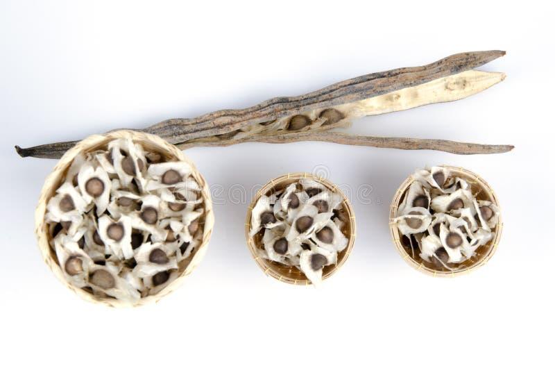 Concombre-chinois amer de graines (fuite de moringa oleifera.) Renforcement du calcium. Réduisez le cholestérol de sang. Et empêch photo libre de droits