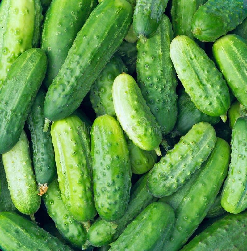 Concombres comme texture de fond de nourriture Culture sélectionnée de concombre photo stock