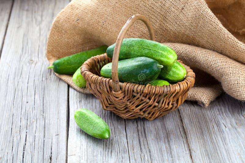 Concombres de récolte dans un panier photographie stock libre de droits