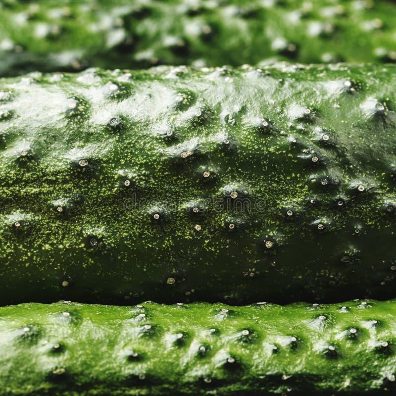 Concombres juteux frais, fond Légumes verts sains photographie stock libre de droits
