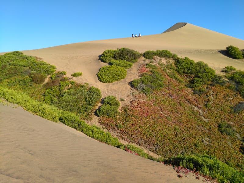 CONCON, O CHILE, O 18 DE DEZEMBRO DE 2016: vista à duna de areia coberta com fotografia de stock royalty free
