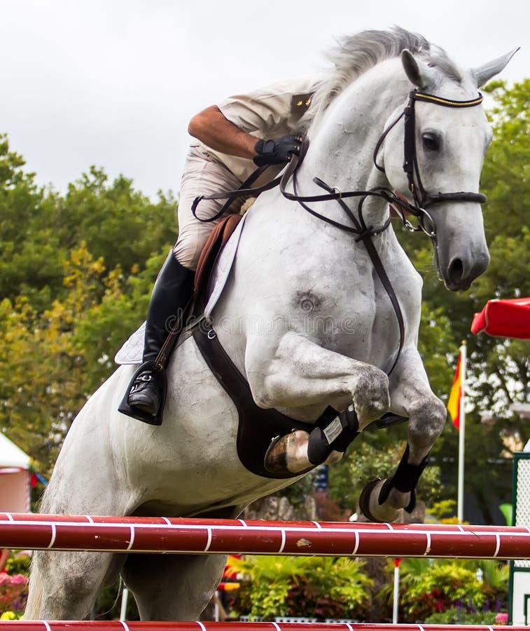 Concorrenza di salto del cavallo fotografie stock libere da diritti