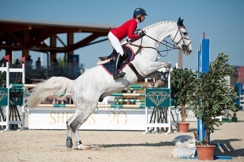 Concorrenza di salto in Pezinok, Slovacchia del cavallo fotografia stock libera da diritti