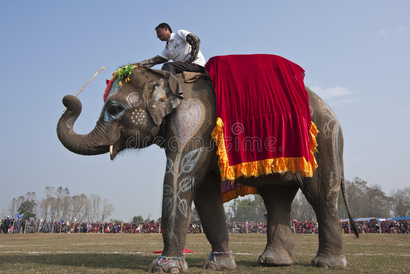 Concours de beauté - festival d'éléphant, Chitwan 2013, Népal photos stock