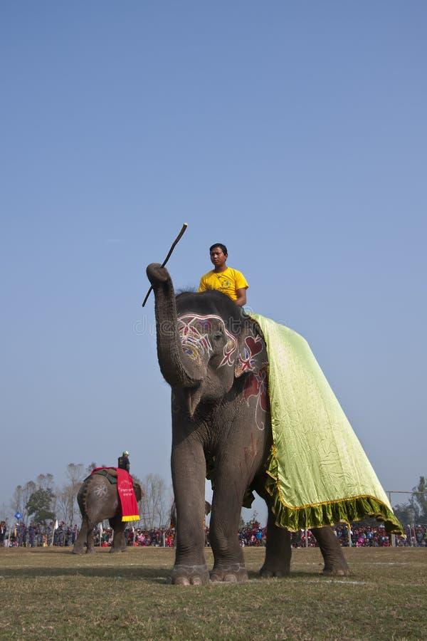 Concours de beauté - festival d'éléphant, Chitwan 2013, Népal image libre de droits