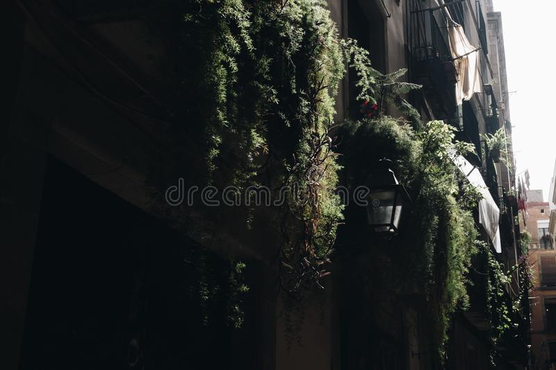 Concrete Building Surrounded by Potted Vine Plants stock images