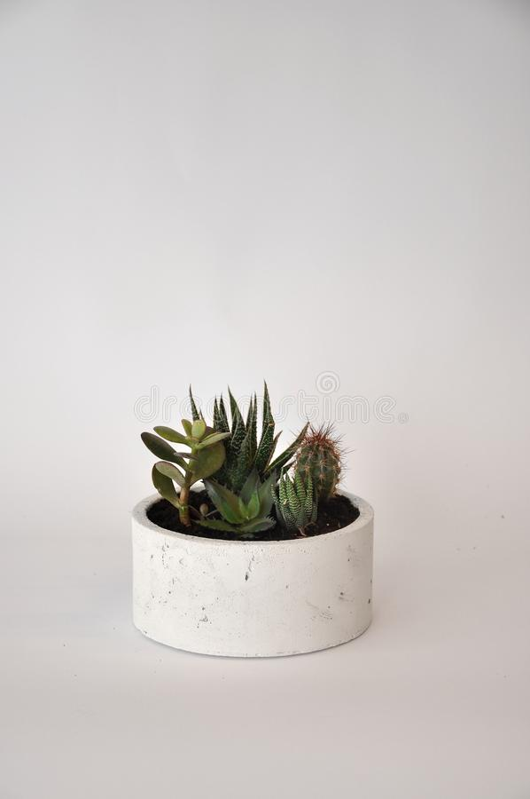 Concrete white cylinder planter pot royalty free stock photography