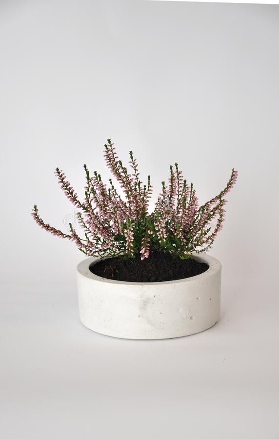 Concrete cylinder planter pot royalty free stock photo