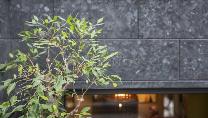 Concrete Facade with green tree, cafe exterior, panorama. Copy space stock image