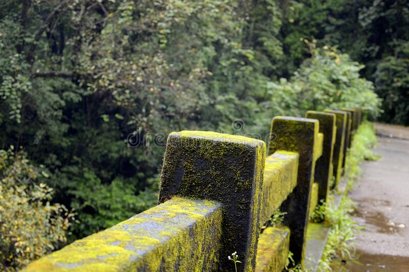 Concrete Fence With Green Moss Near Green Tree Free Public Domain Cc0 Image