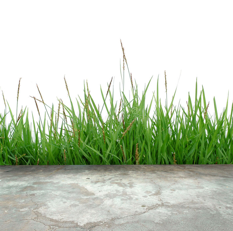 Concrete floor with green grass. Concrete floor and green grass royalty free stock photography