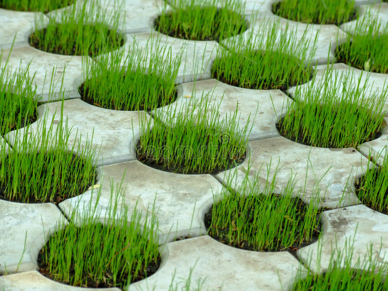Download Concrete Grass pattern 01 stock photo. Image of large - 10004574