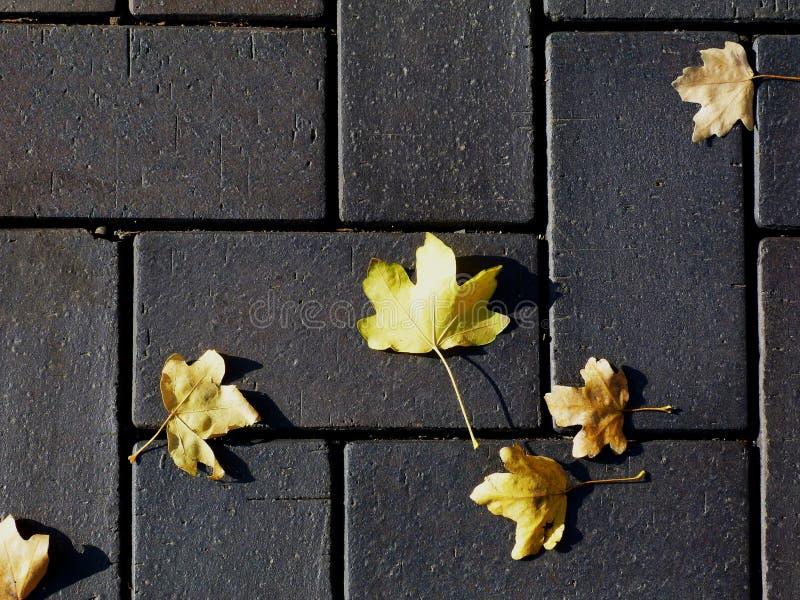Concrete het bedekken textuur in grijs beton met gele bladeren stock foto's