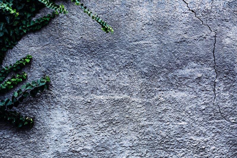Concrete muur met groene klimop abstracte achtergrond royalty-vrije stock afbeeldingen