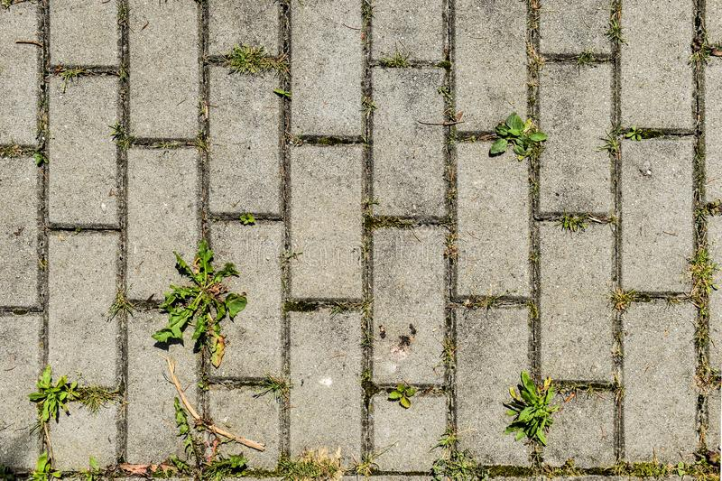 Concrete pavement coblestones texture on the sidewalk with small green plants and grass through stock photo