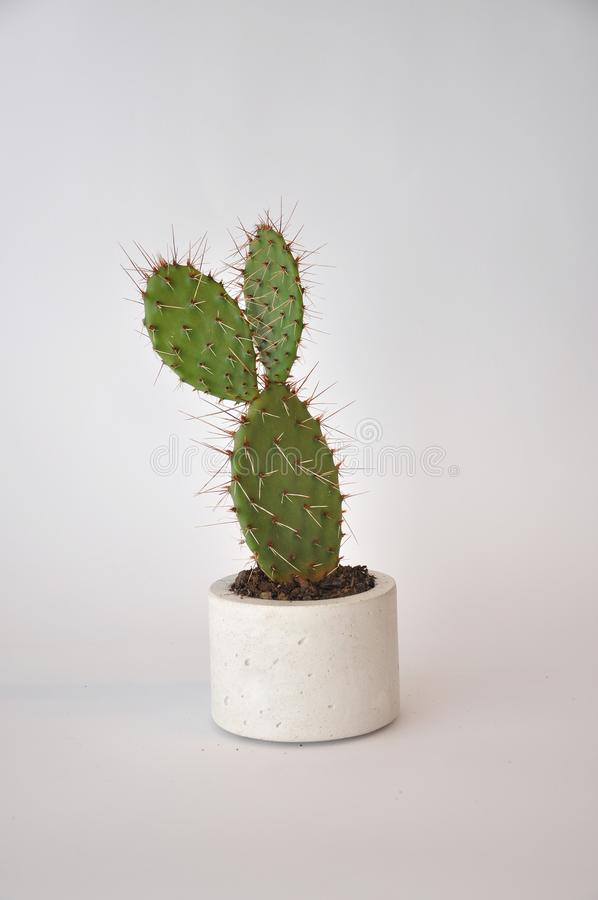 Concrete planter pot cylinder with cactus royalty free stock photo