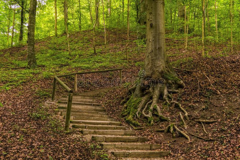 Concrete Stairs Beside Uprooted Tree On Forest stock photos