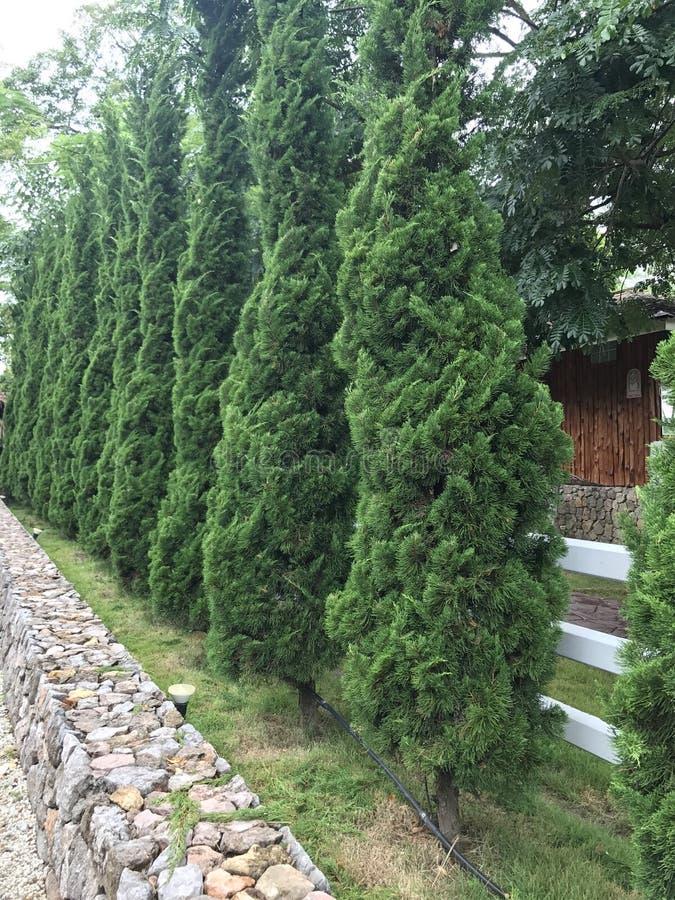 Sky Garden Walk: Walk Way In The Garden, Cement Pathway Stock Photo