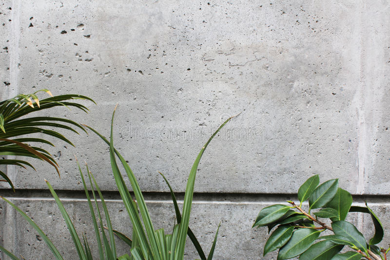 Concrete wall with bottom border of various leaf shapes. Horizontal aspect royalty free stock images